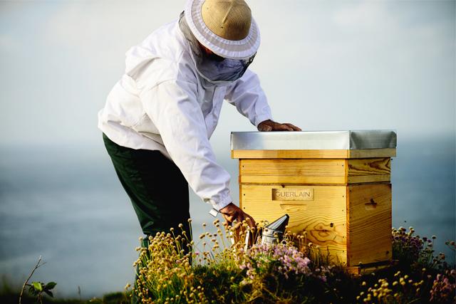 ミツバチの保護活動